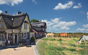 New Forest & IOW Hotel template.jpg