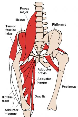 hip flexor back pain