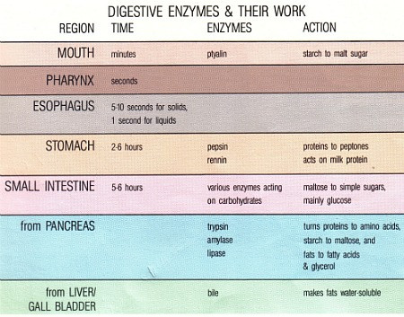 digestive enzyme functions