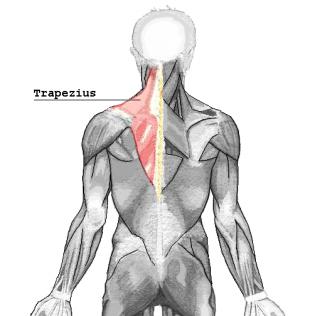 traps back pain
