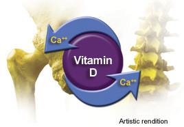 Vitamin D and Calcium for Female Athletes