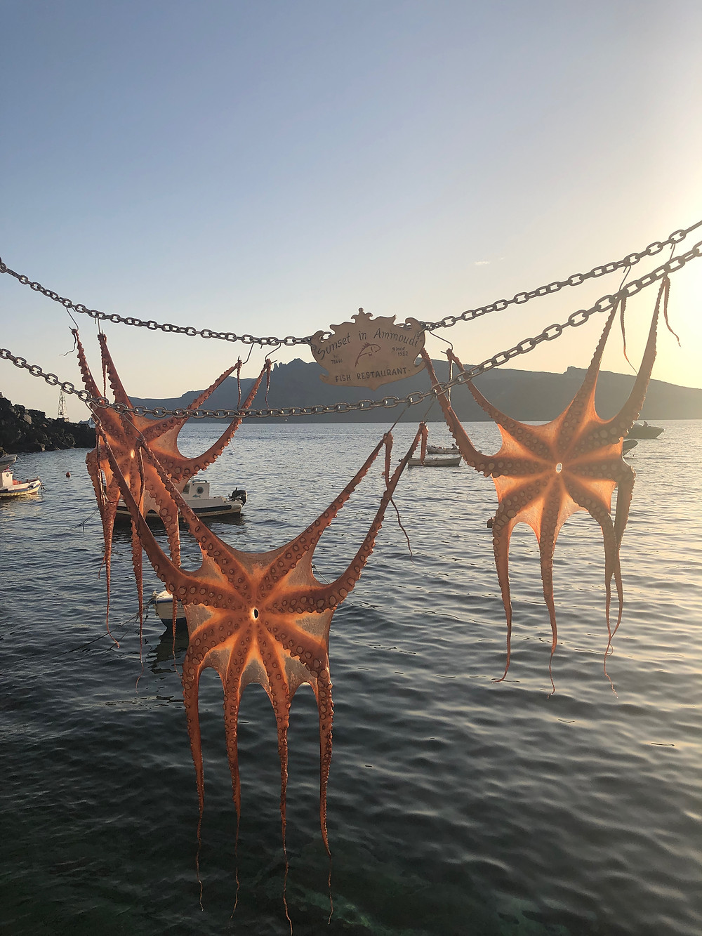 octopus drying at Sunsets Restaurant in Ammoudi Bay Oia Santorini Greece