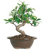 Plant Identificaton