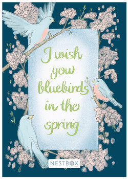 Bluebirds in the Spring