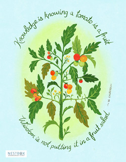 Tomato Wisdom