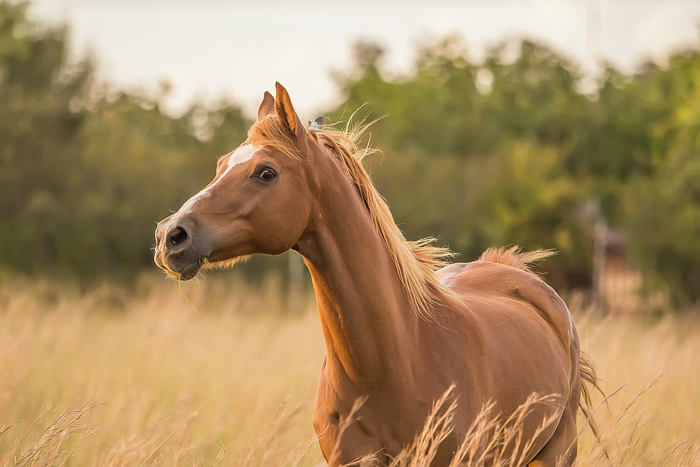 Image of a horse in a field