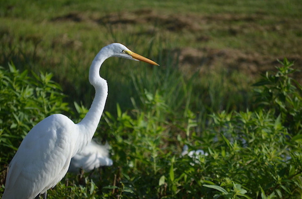Cover Egret_Looking right2x.jpg