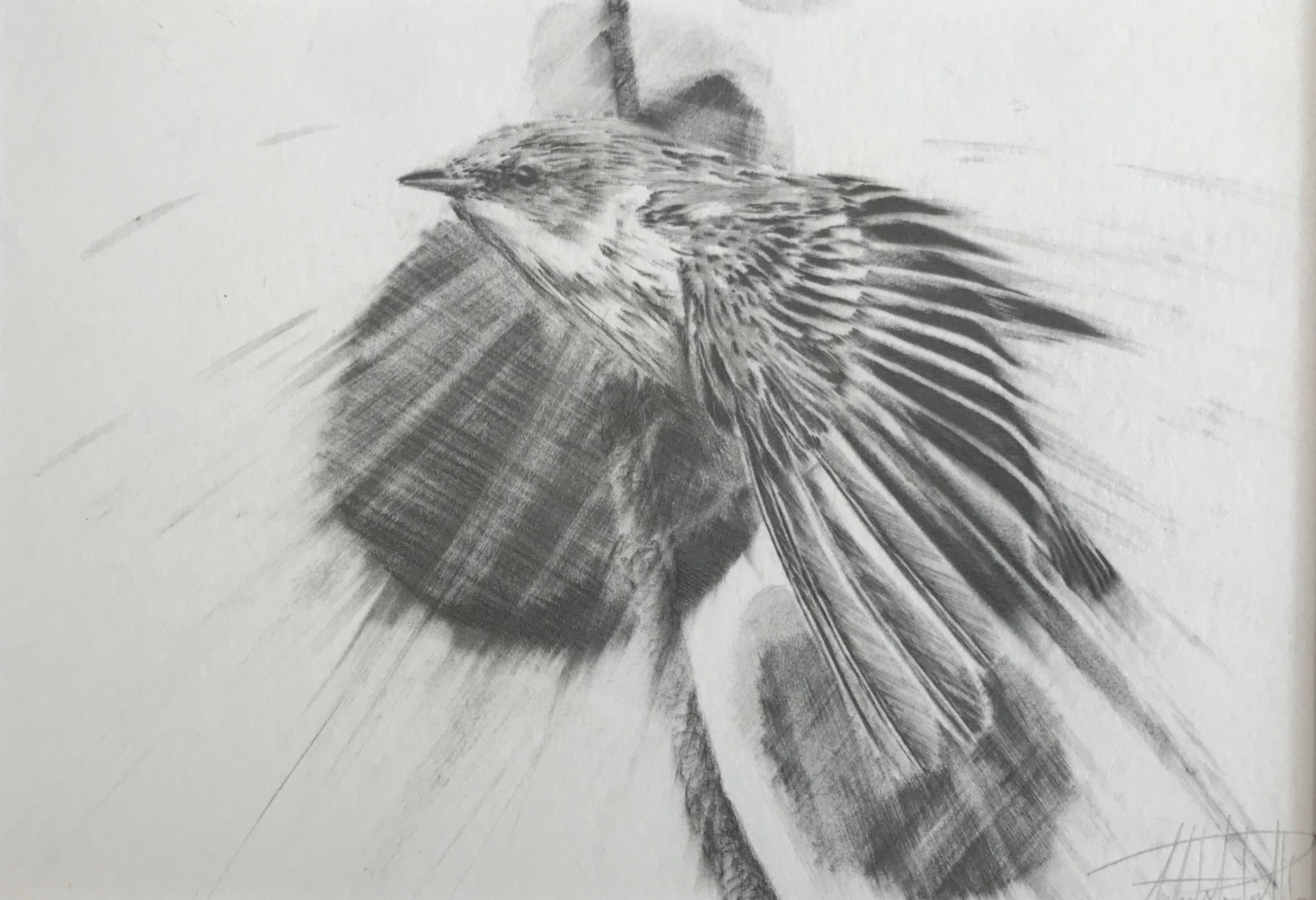 """""""Cerulean Warbler""""-SOLD"""