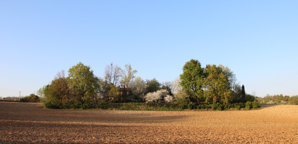 Il Roseto Seen by the Fields