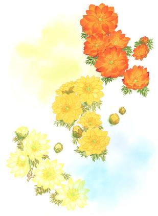 「花に聞くvol.14 福寿草」