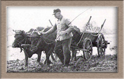 Kuhfuhrwerk Kopie.jpg
