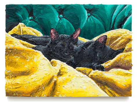 Cats on yellow blanket