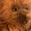 Thumbnail: Amber