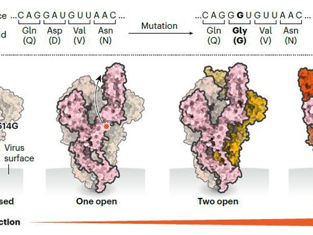 Tracking the Mutation Potential of SARS-CoV-2