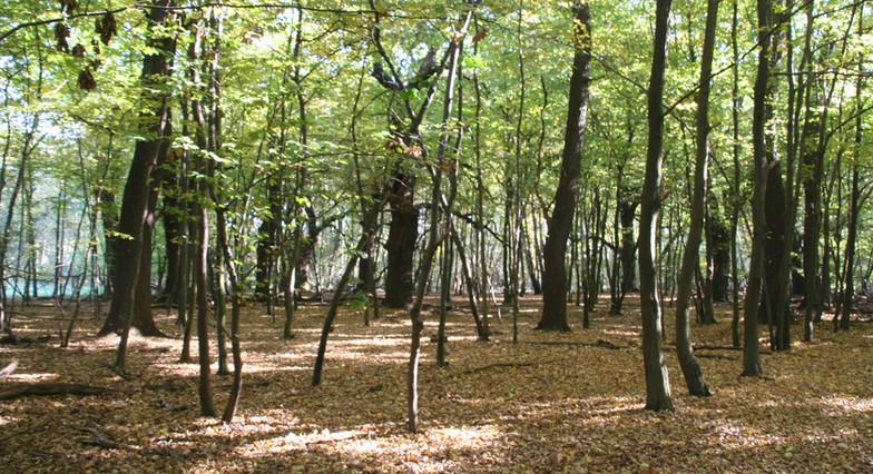 Raketenwald