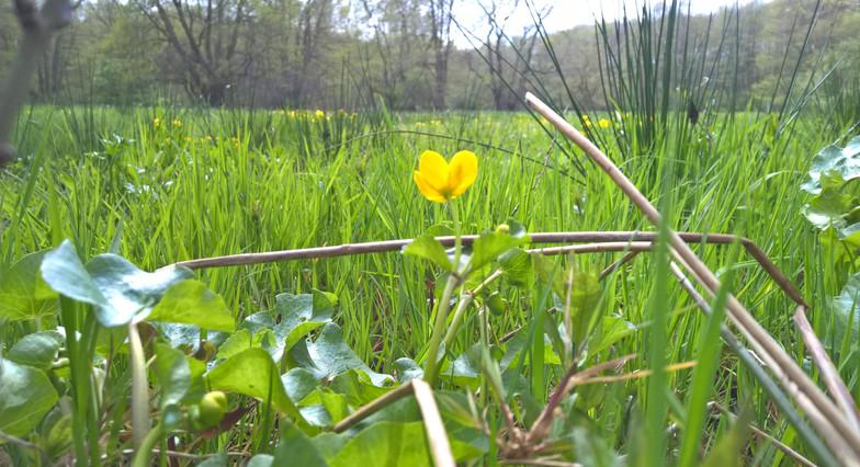 Blume im Zarth