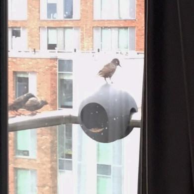 birdball_london_3.jpg