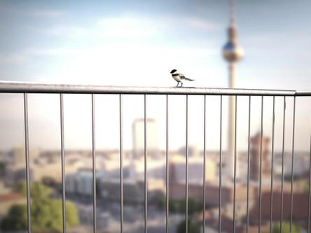 Neue Farben für das BIRDBALL Balkonvogelhaus von rephormhaus!