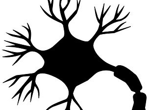 nerve-cell-neuron-brain-neurons-nervous-