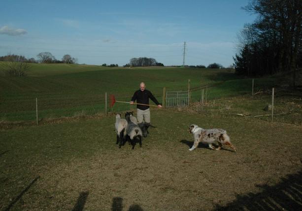 Journey herding.jpg