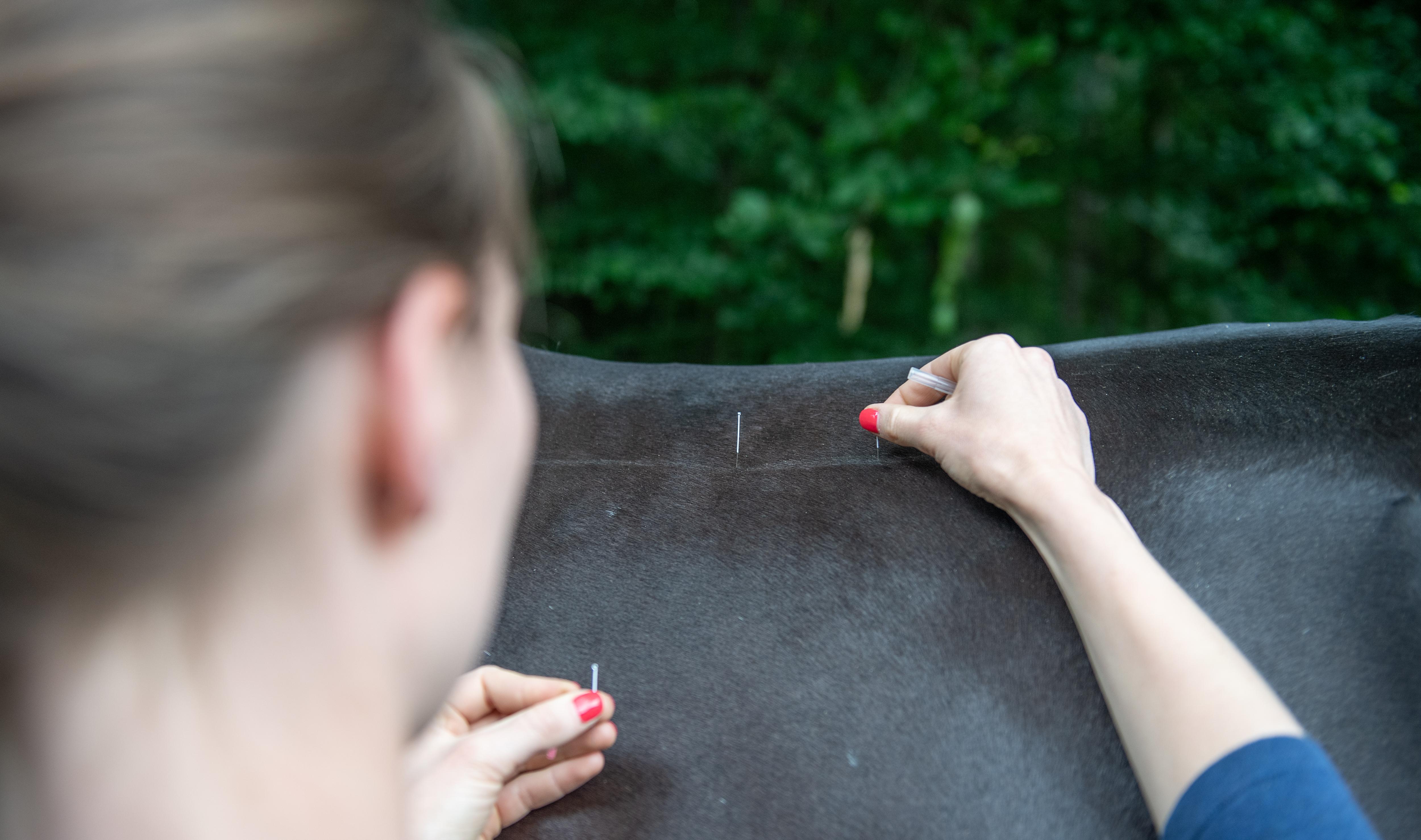 Einblick in die Akupunktur