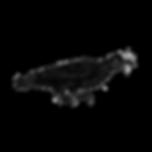 logo_ccwdmoss_2019_1.png