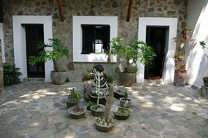 Cactus garden, LH.jpeg