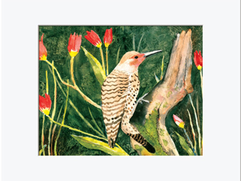 Northern Flicker Print