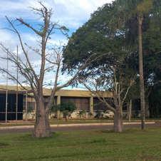 Baobás em frente à Embrapa Cenargen, Brasília. Foto: André Lúcio Bento