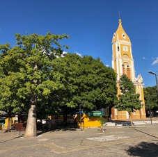 Baobá em Floriano, Piauí. Foto: Sara Rodrigues.