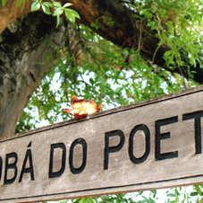 Baobá do Poeta, Natal-RN. Foto: Fred Filho.