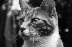vétérinaire-chat