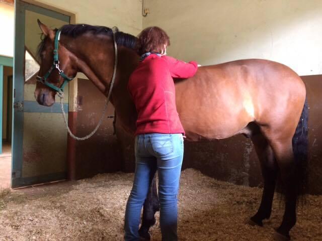 osthéopathie équine