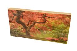 הדפסה ישירה על עץ
