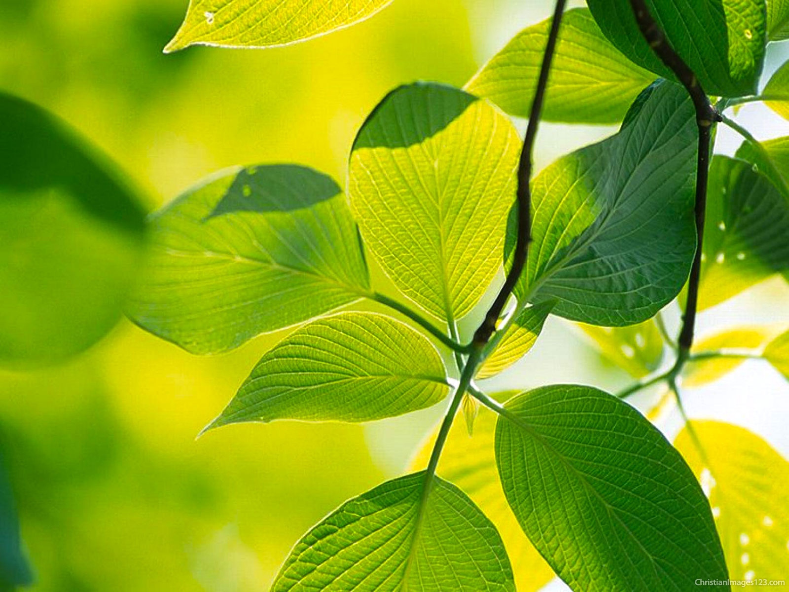 high-resolution-leaves-powerpoint-background