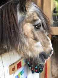 Unsere Ponys