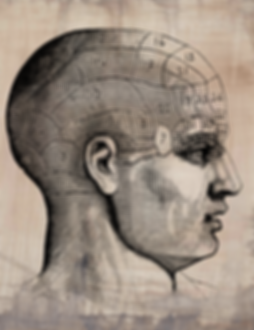 Phrenology Taupe .png