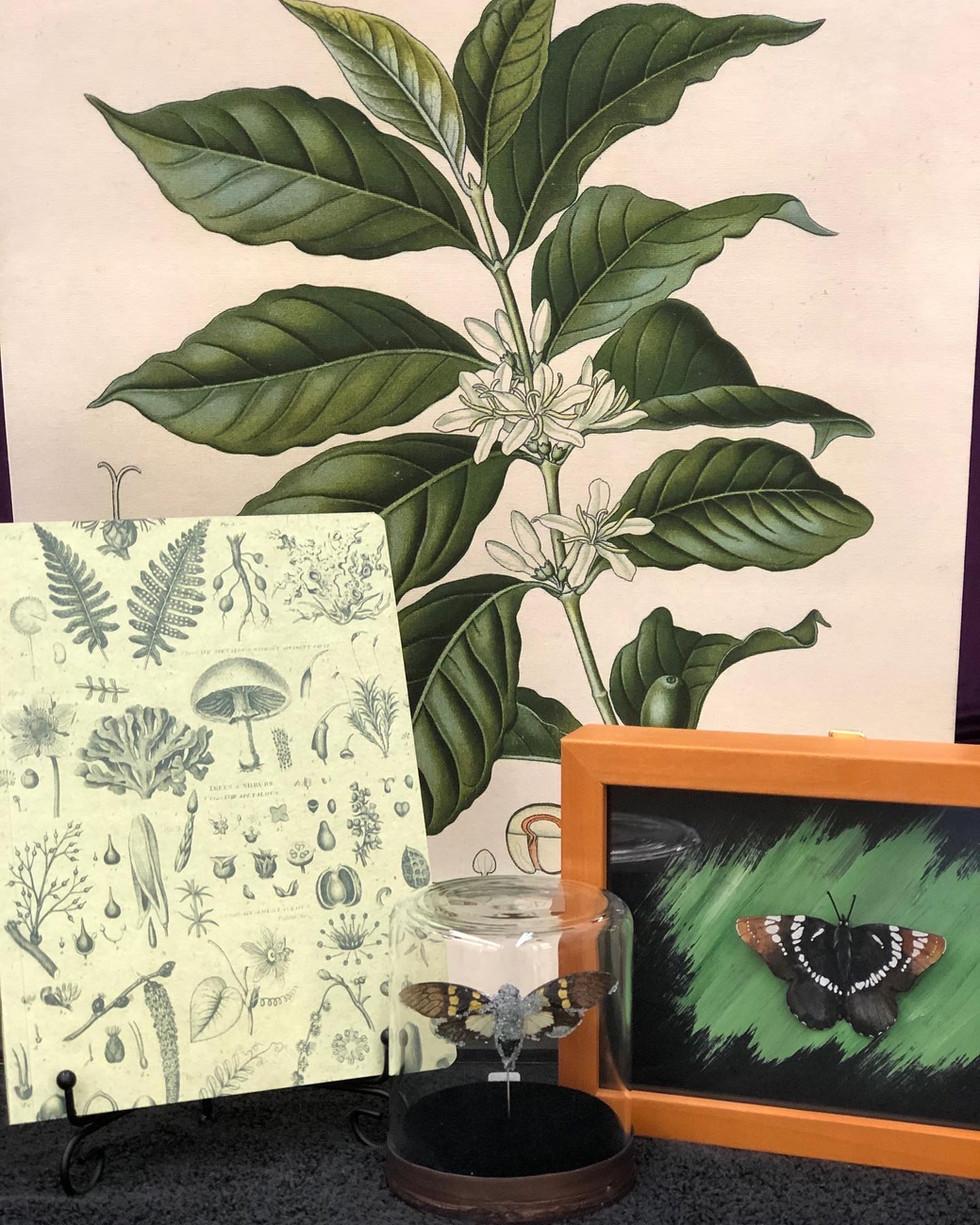Nature Inspires Art at Crow's Curiosities!