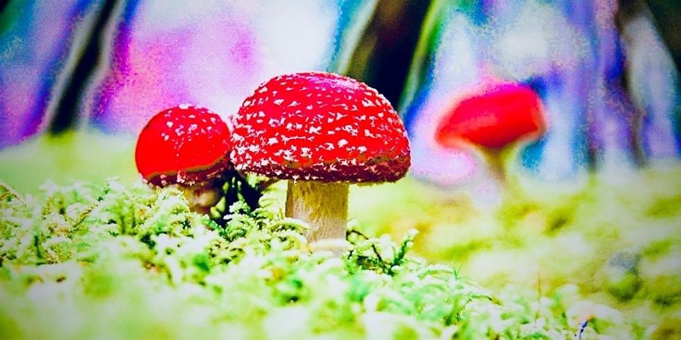 Psychosis & Ecology: An Exploration