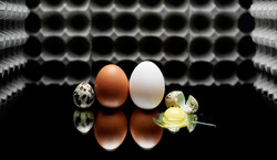 Eggs, portrait, Nathan Lanham Photograph