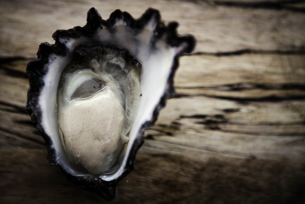 oyster,
