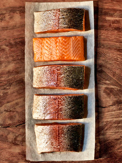 ocean trout, portrait , nathan lanham, p
