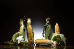 Corn, gang, nathan lanham, photography,