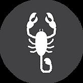 scorpions.png