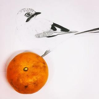 Jay bids Mandarin farewell
