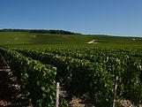 Champagne Y&A Launois - Le rognage