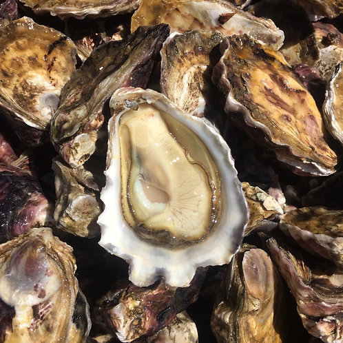 20 Dozen Oysters