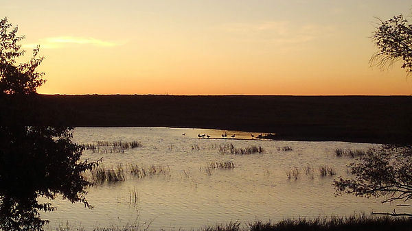 sunrisegardendike9-15-19ducks.jpg