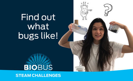 STEAM Challenge: Find out what bugs like!
