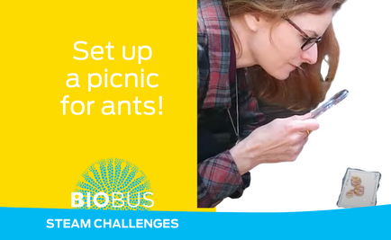 STEAM Challenge: Set up a picnic for ants!